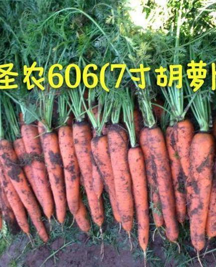 圣农胡萝卜606